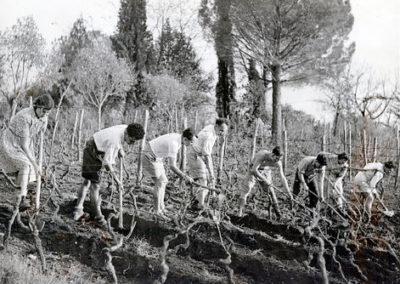 Italy: Grottaferrata